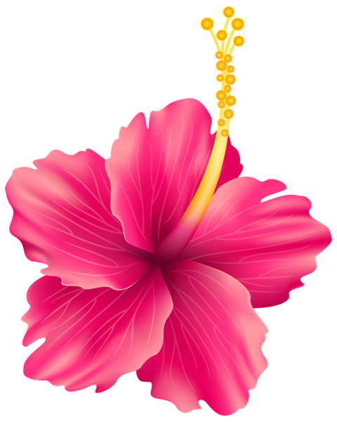 Tropical floral background png. Pink exotic flower transparent