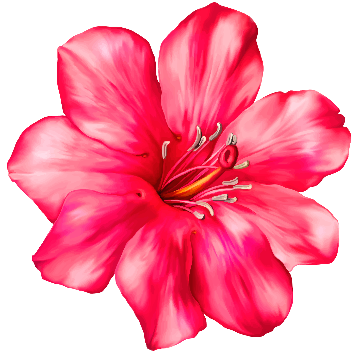 Tropical flowers png. Exotic pink flower clipart