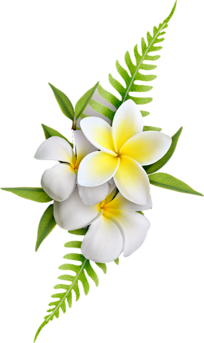 White small bell flowers png clipart vector free. Exotic transfer decoupage kwiaty