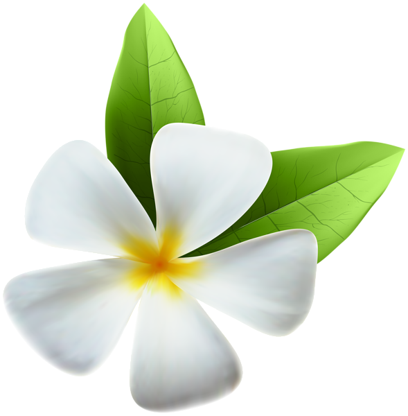 Exotic flower png. White clip art image