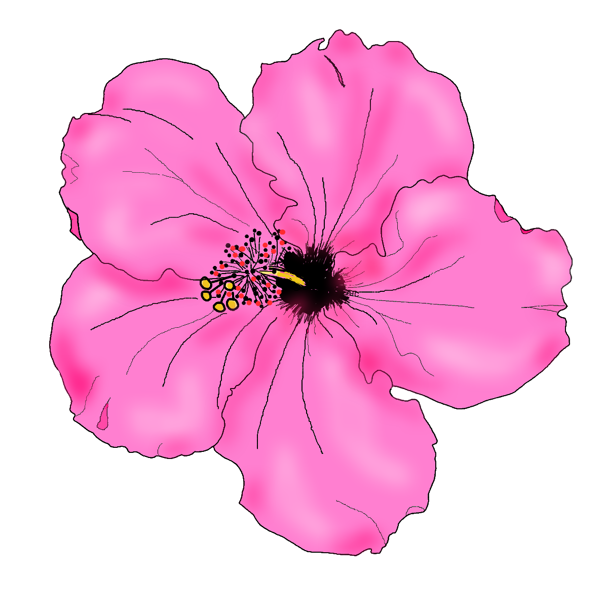 Free hibiscus flower drawings. Drawn flowers png vector royalty free stock