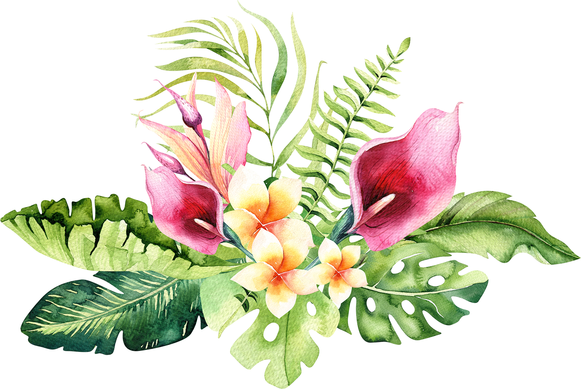 Tropical flower watercolor png. Download hand drawn image