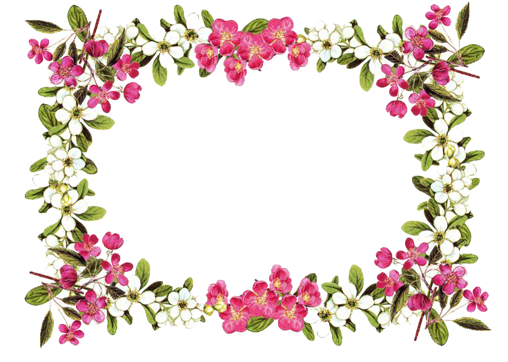 Download borders clipart hq. Transparent png flowers jpg black and white stock