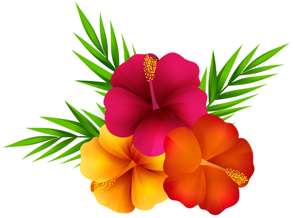 Png images of tropical flowers. Exotic clip art image