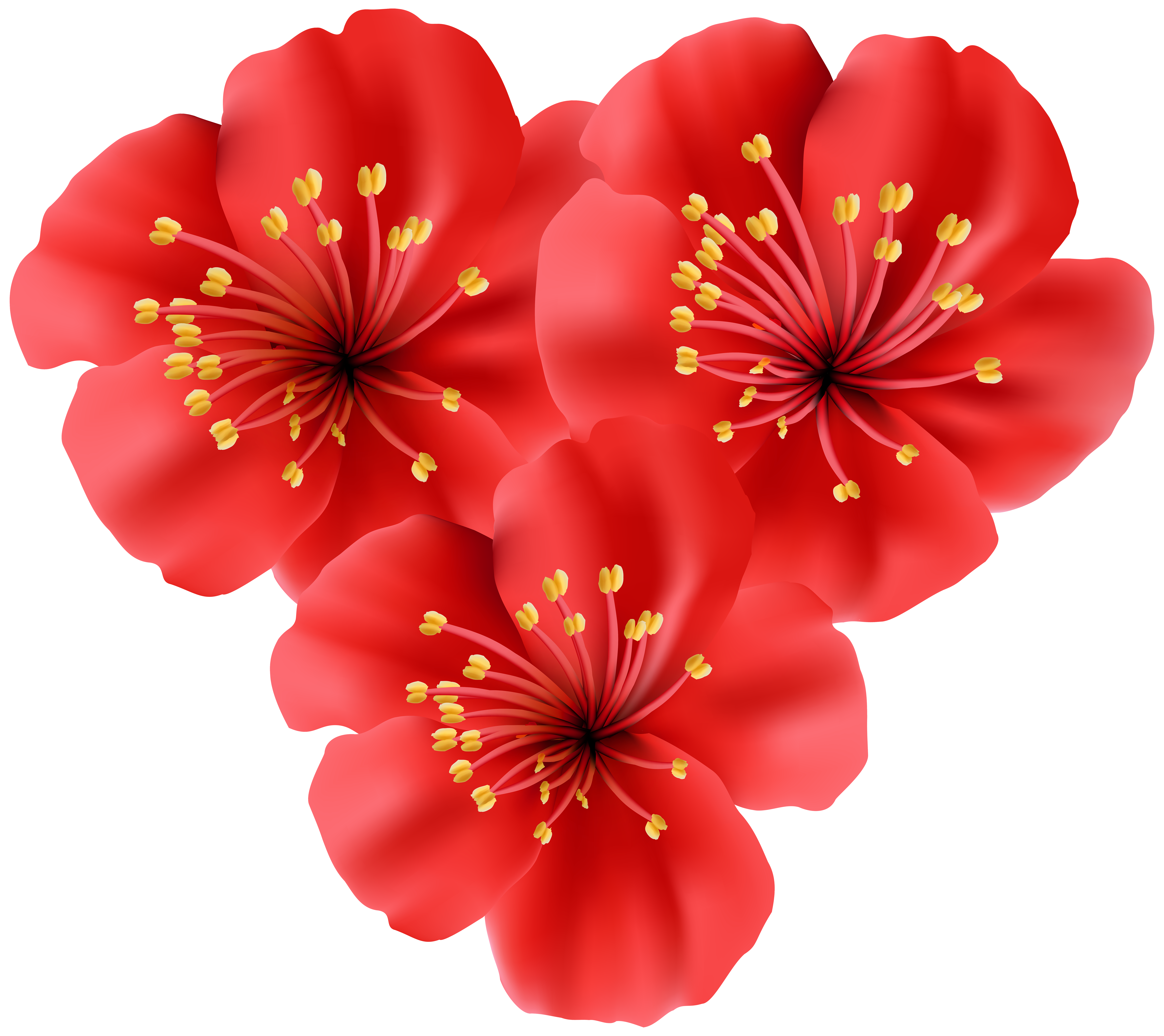 Tropical flowers png. Heart clip art image