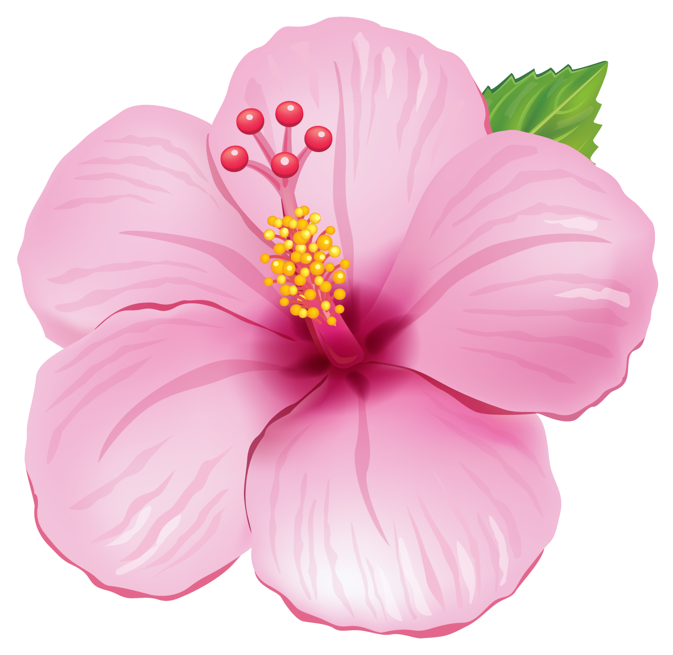 Pink Hibiscus Flower Transparent Png Clipart Free Download Ya
