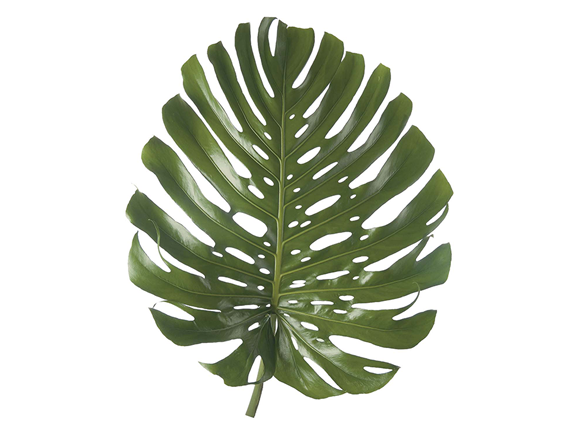Tropical foliage png. Heliconias net monstera