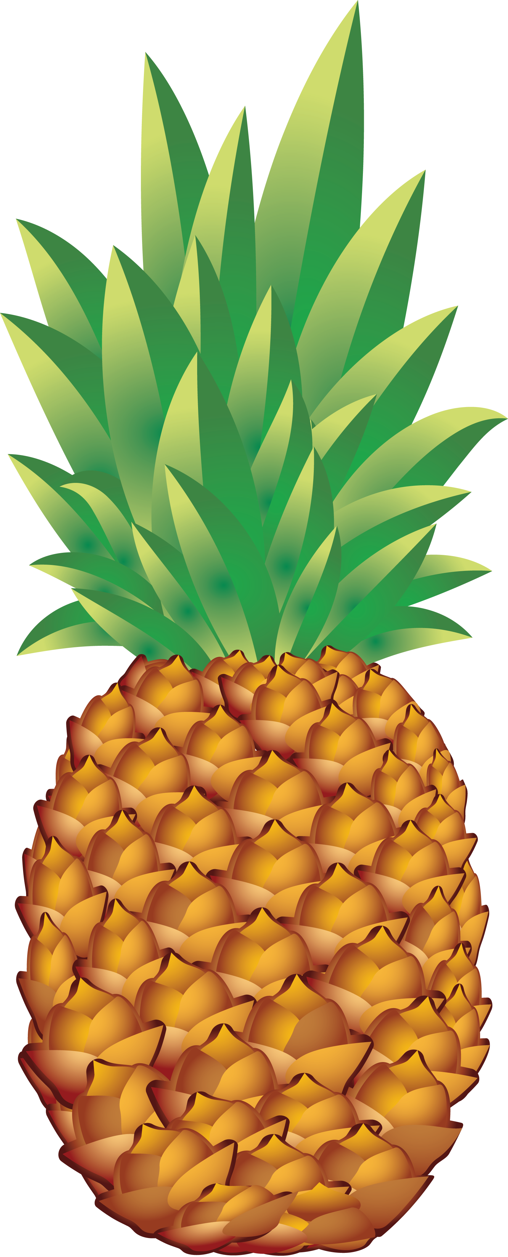 Tropical fruit png. Pineapple images free pictures