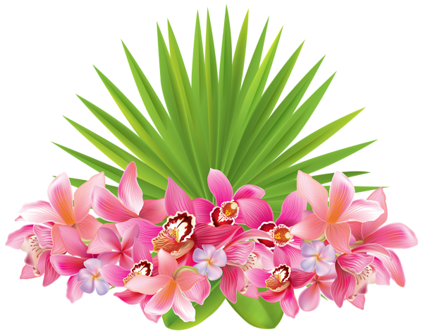Tropical pink flower png. Flowers transparent images pluspng