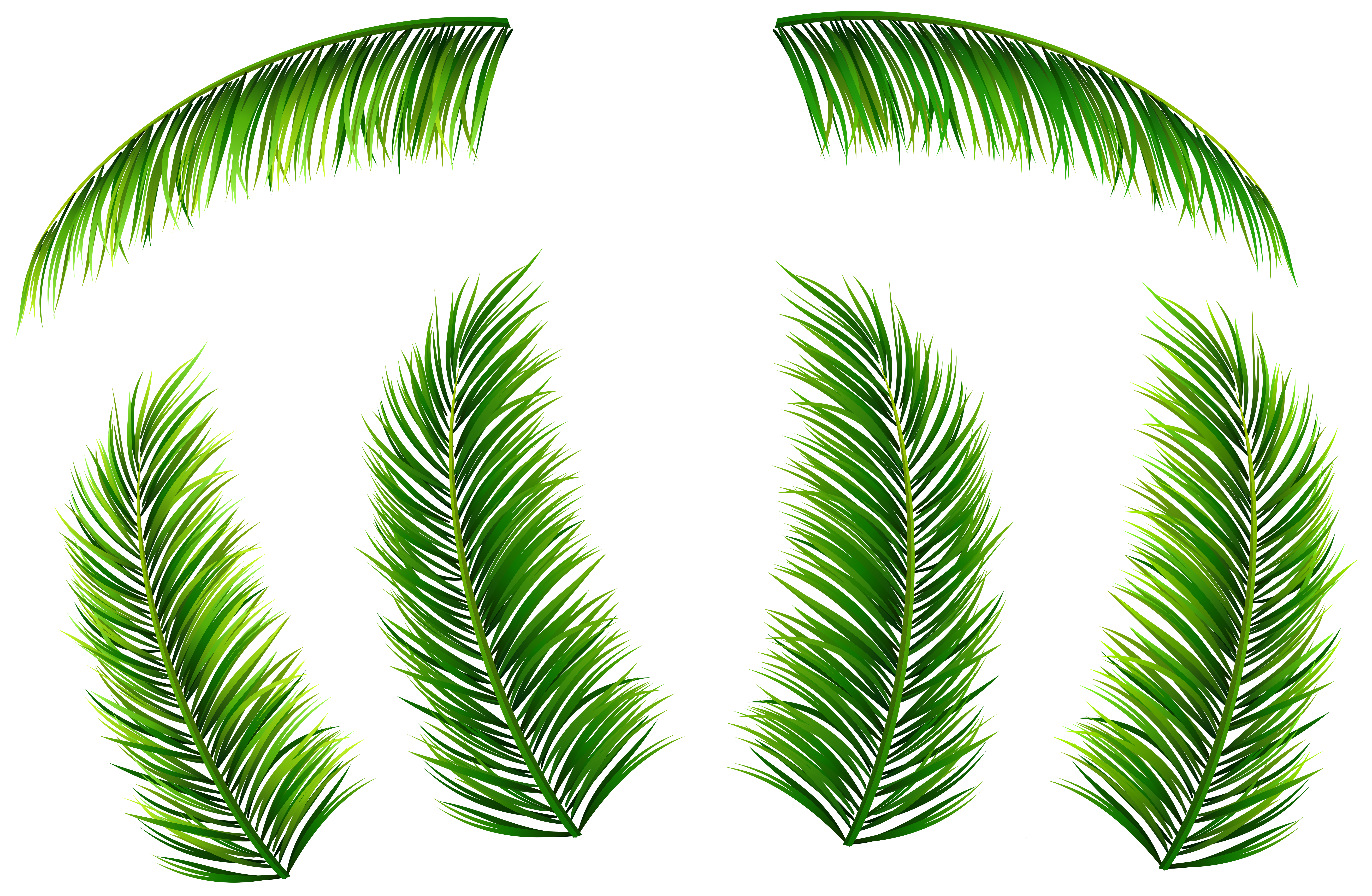 Palm fronds png. Leaves clip art image
