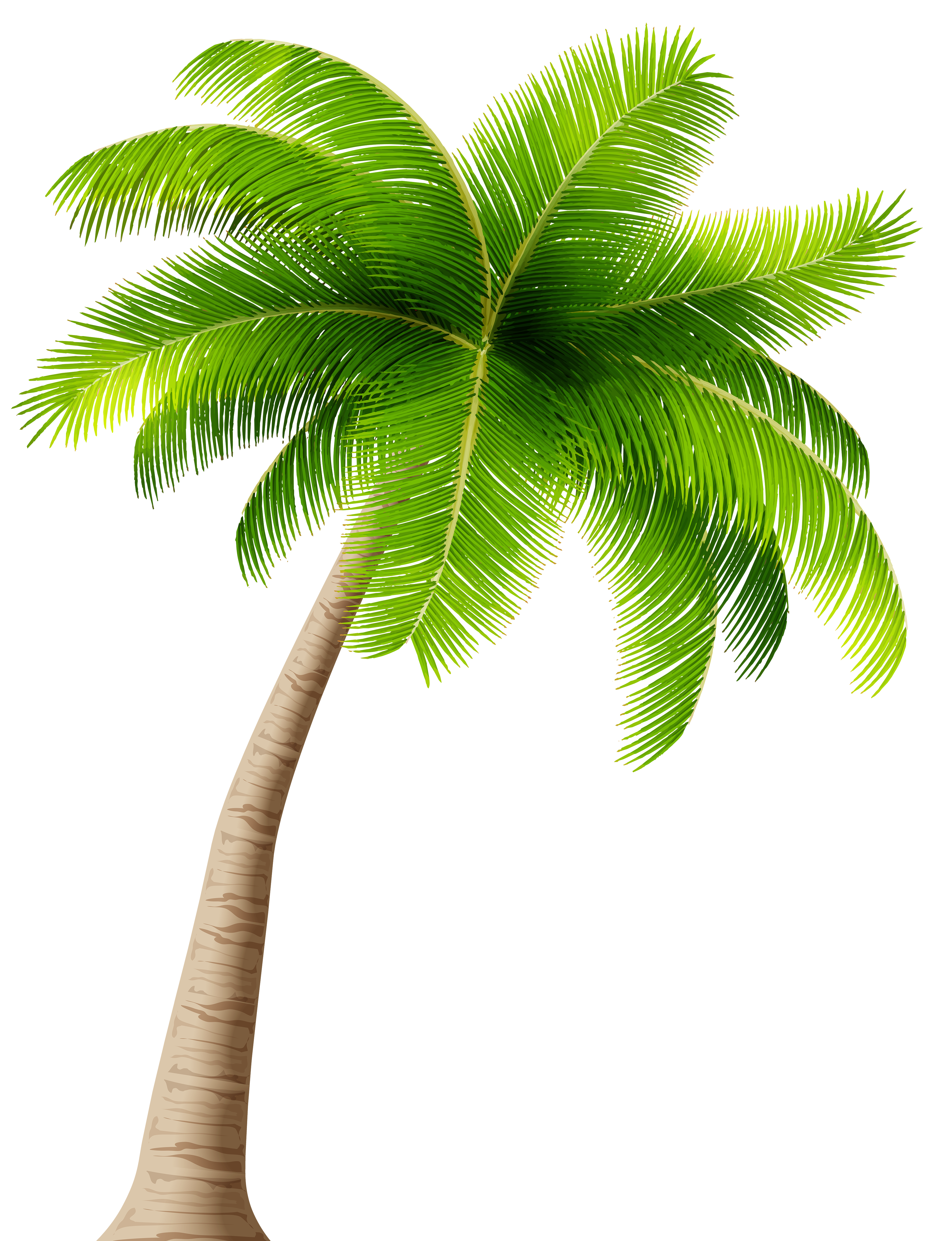 Palm .png. Transparent png image gallery