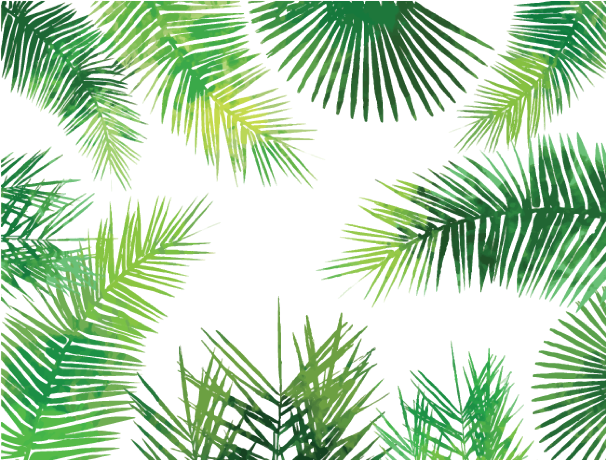 Watercolor palm leaves png. Inkess