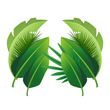 Tropical leaf png. Leaves images vectors and