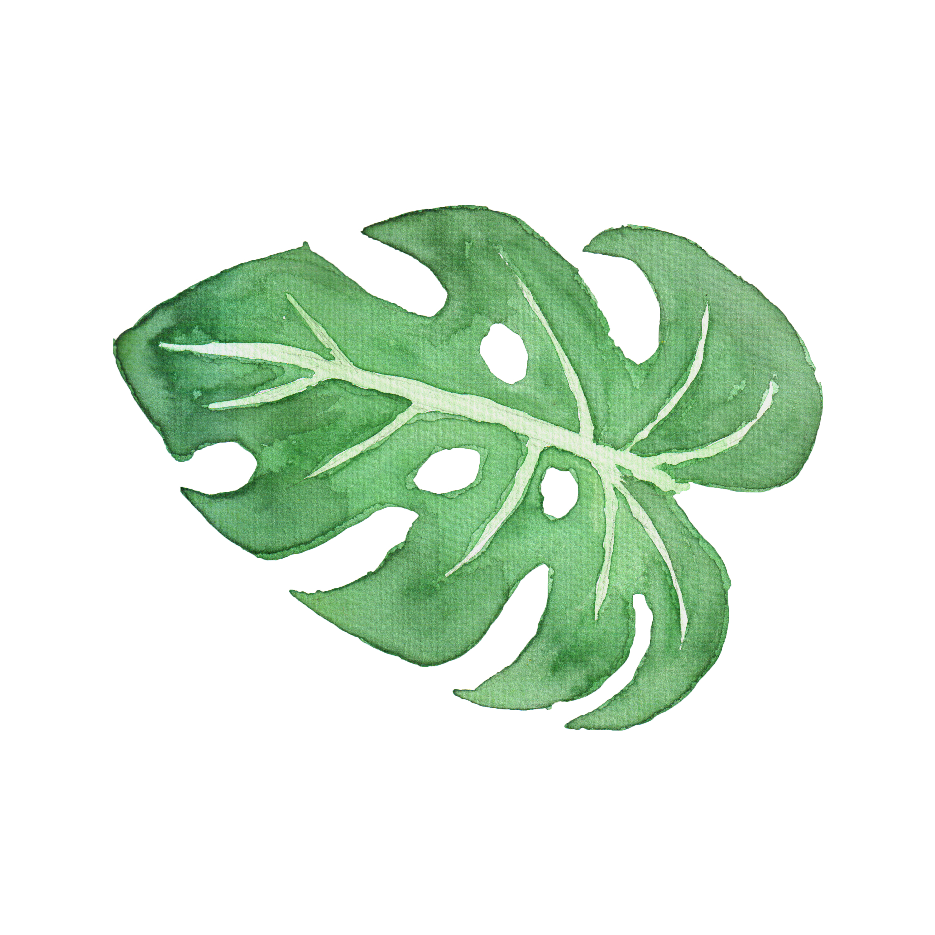 Tropical leaf watercolor png. Leaves on behance