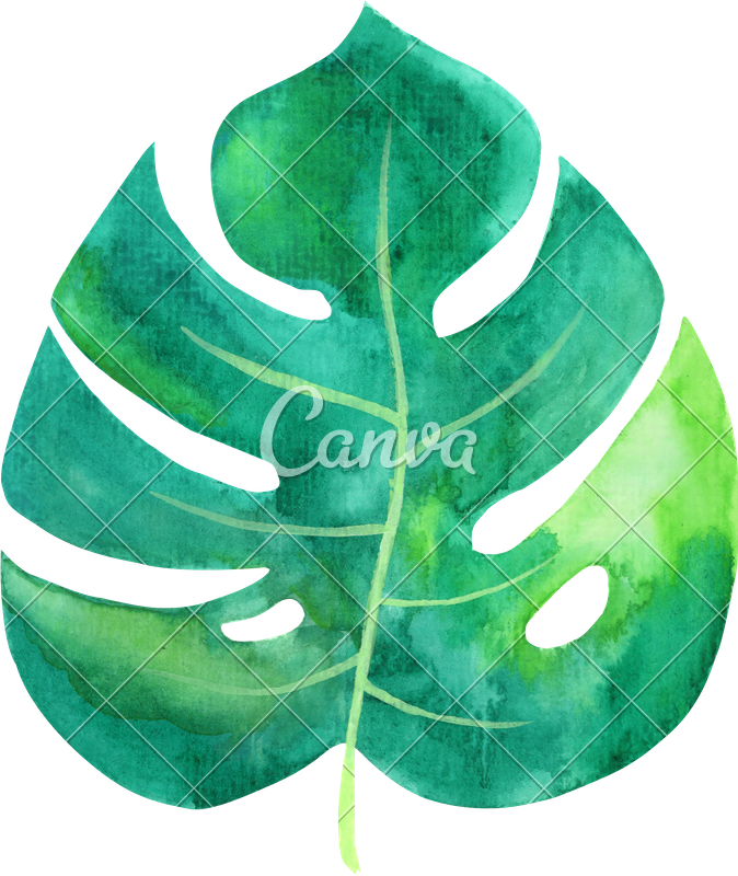 Tropical leaf watercolor png. Photos by canva