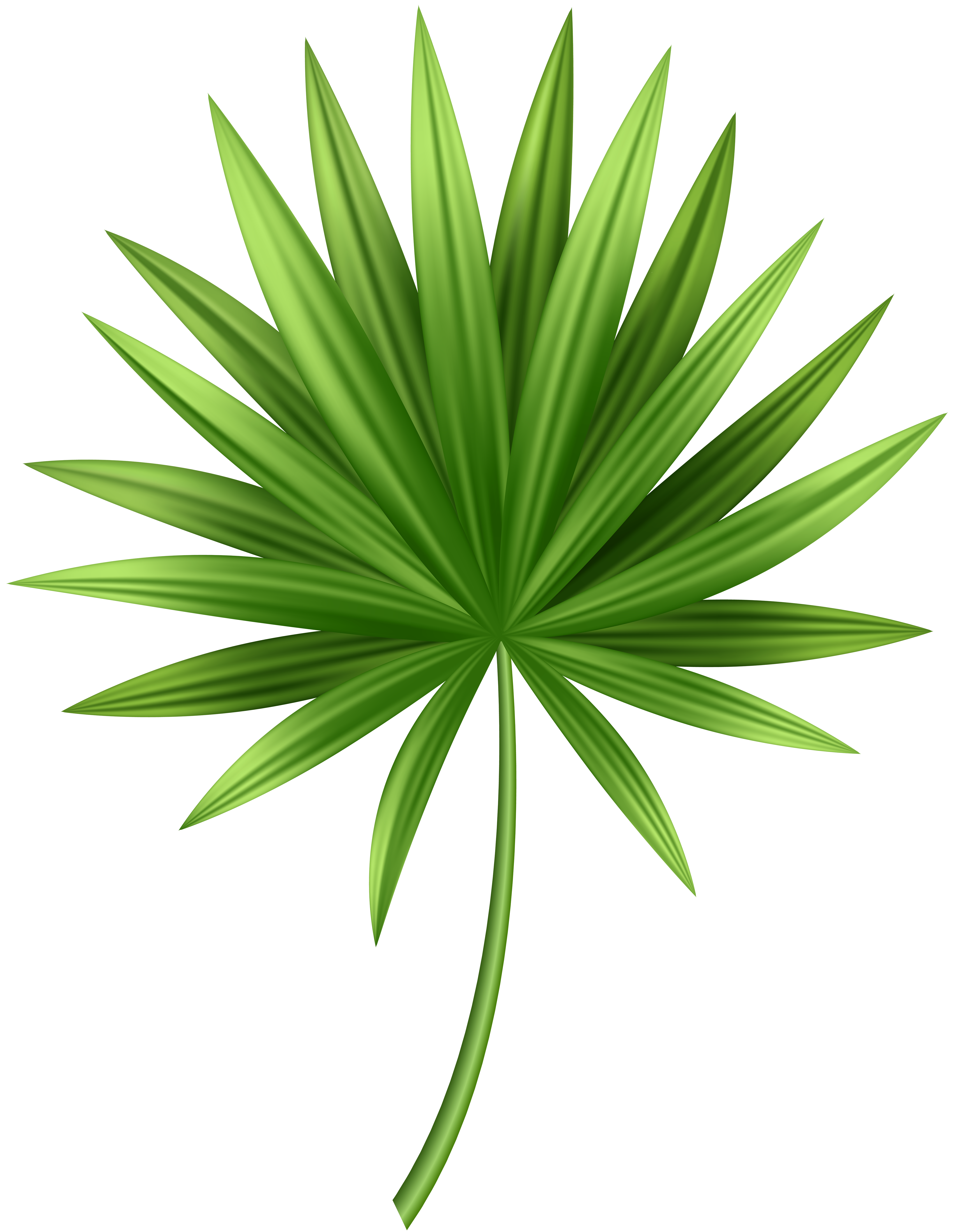 Tropical leaves png. Leaf clip art gallery