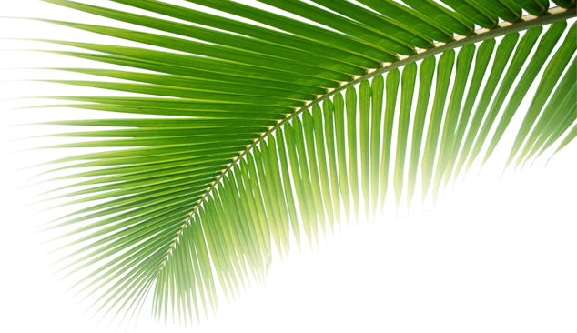 Tropical leaves png transparent in balck. Leaf my phuket holiday
