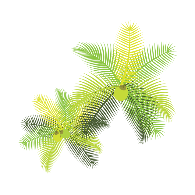Tropical leaves with flowers. Coconuts vector coconut leaf png library