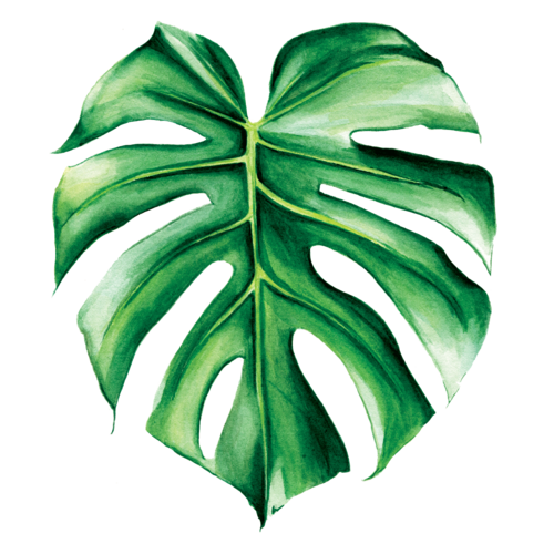 Tropical leaves watercolor png. Image result for monstera