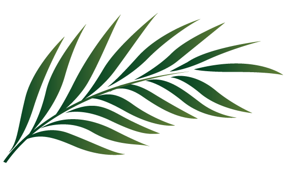 Tropical palm leaves png. Tree leaf clipart clip
