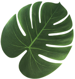 Tropical palm leaves png. Hawaiian beach party decorations