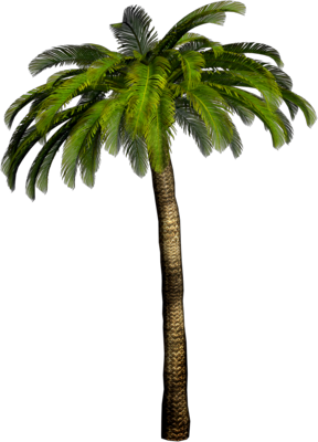 Tropical palm png. Tree