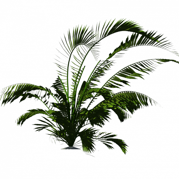 Tropical palm png. Script library ccby tuxfamilyorg