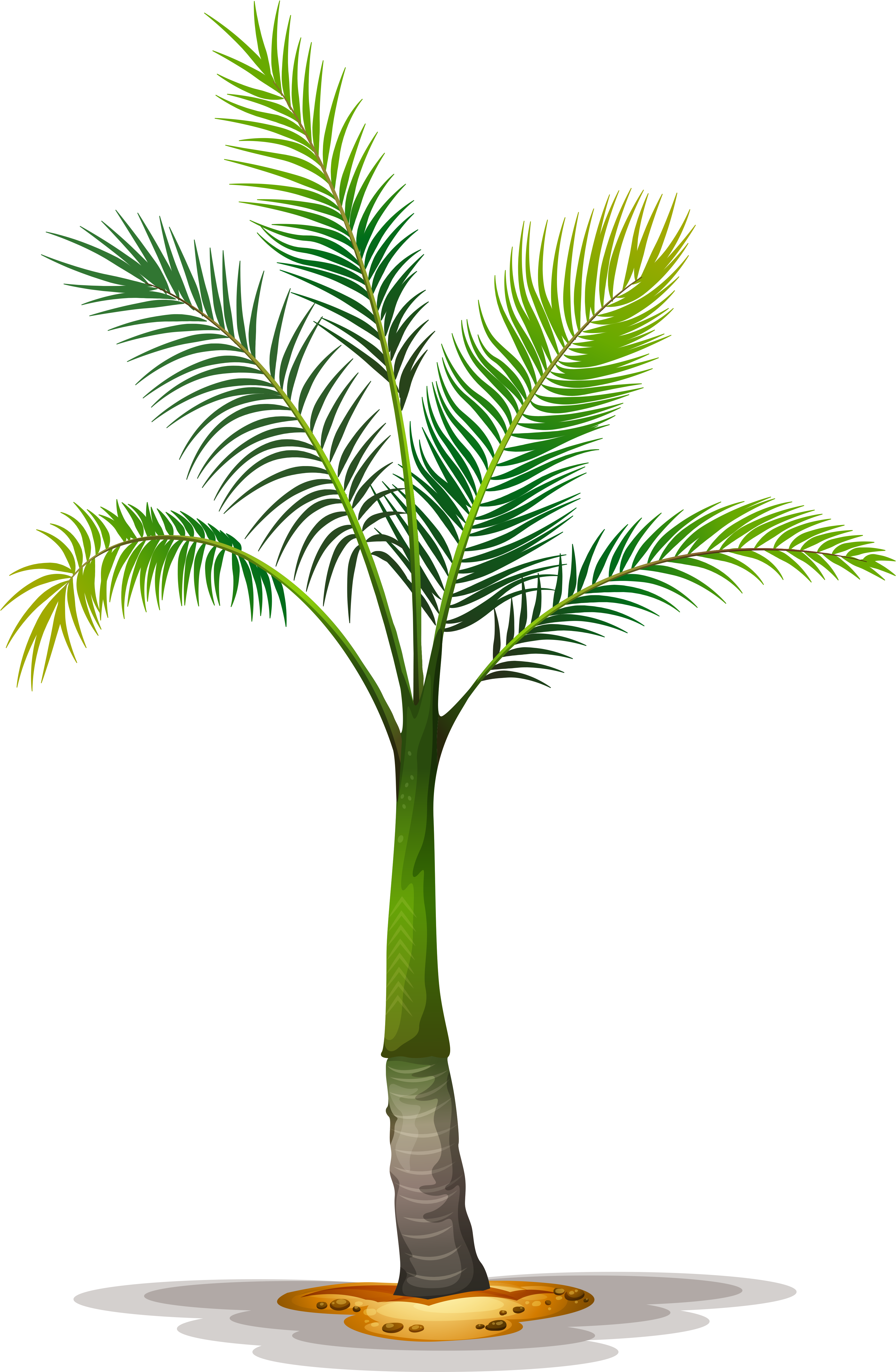 Palm print png. Date clipart tropical tree
