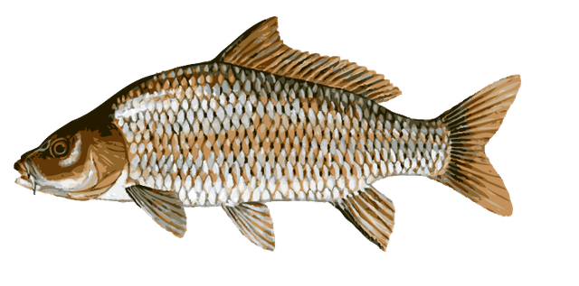 Trout clipart carp. Great clip art of