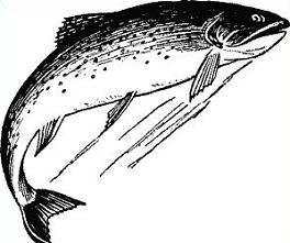 Trout clipart. Free