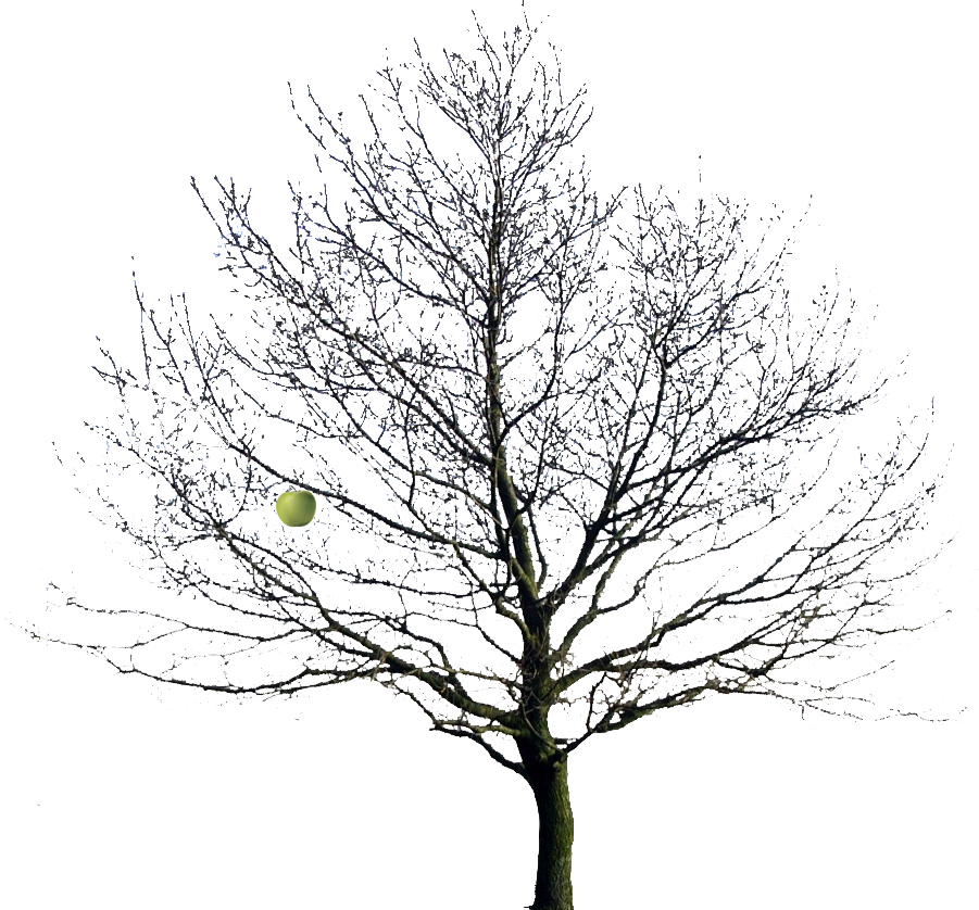 Trunk Apple Tree Transparent Png Clipart Free Download Ya Webdesign