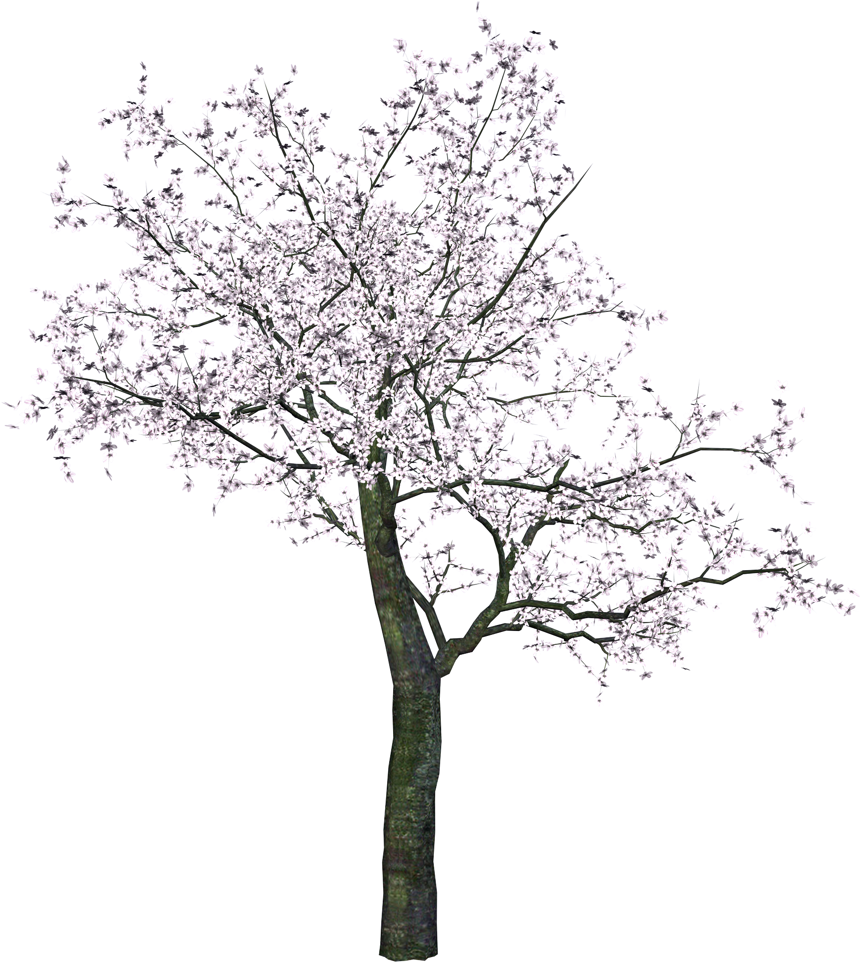 Trunk clipart watercolour tree. Pin by kushalagarwal on