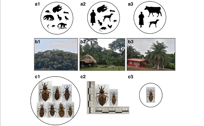Trypanosoma vector. Eco epidemiological transmission patterns