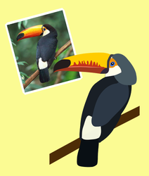 Tucan drawing. Toucan from photo by