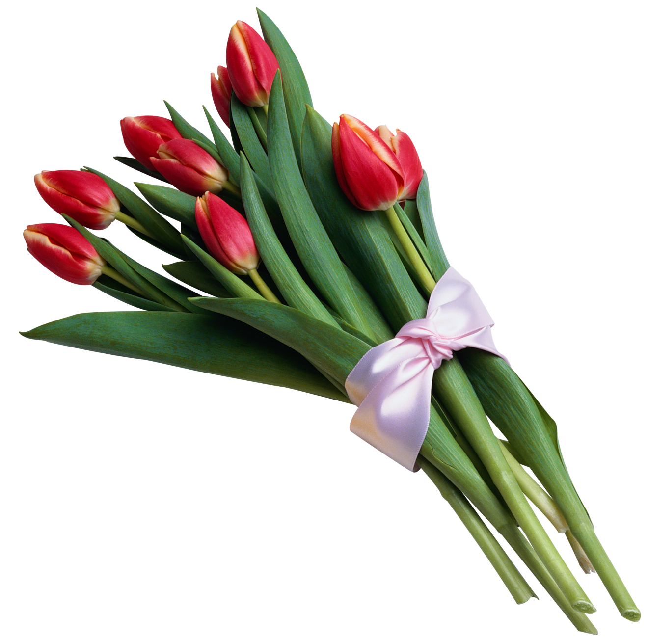 Tulip bouquet png. Of red tulips transparent