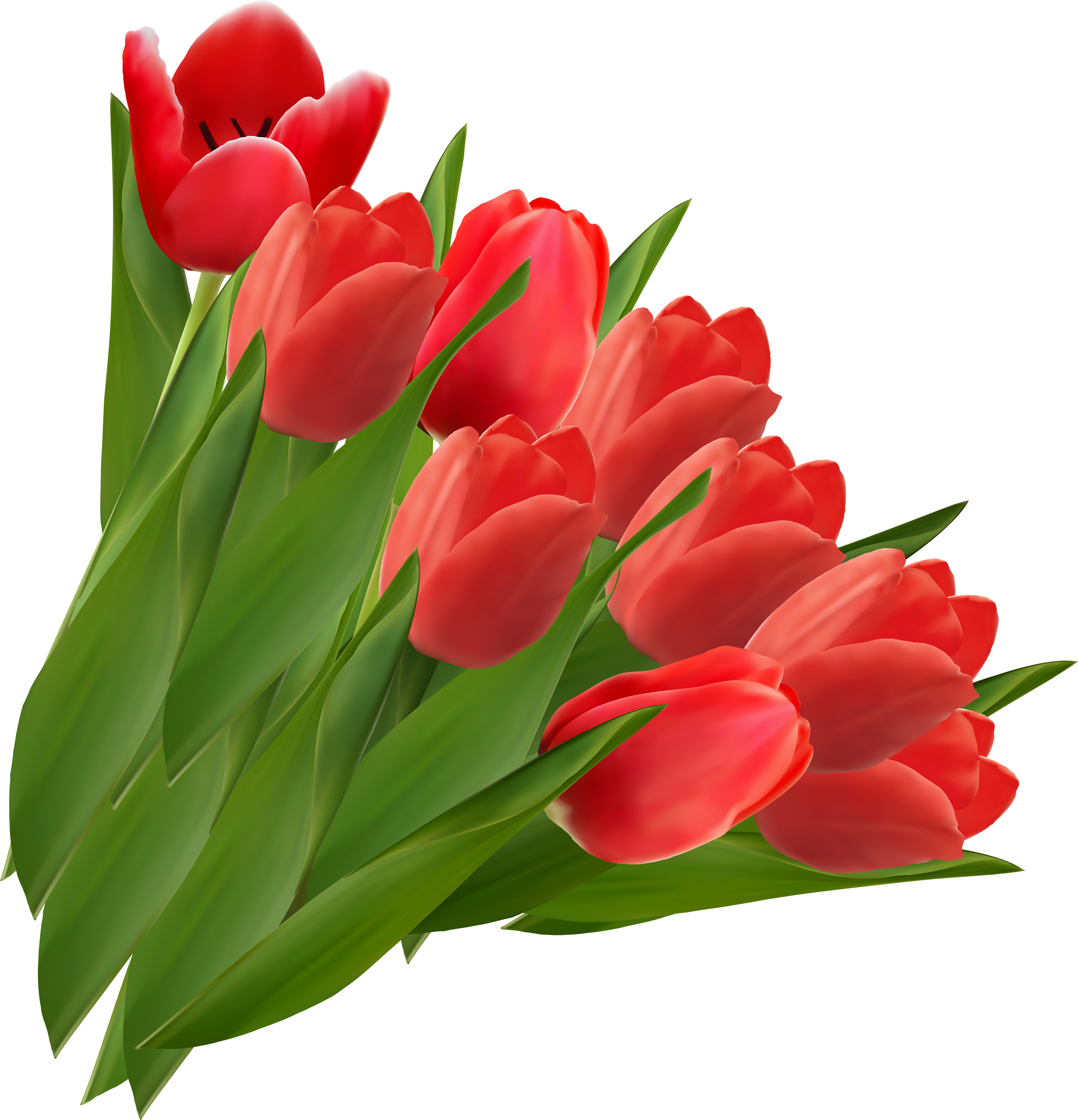 Vector bouquet tulip. Png images free download
