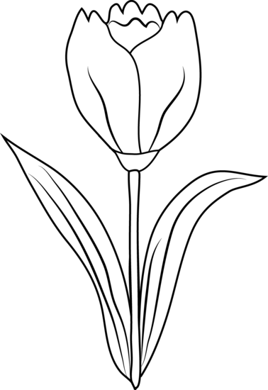 White drawing tulips. Tulip flower coloring page