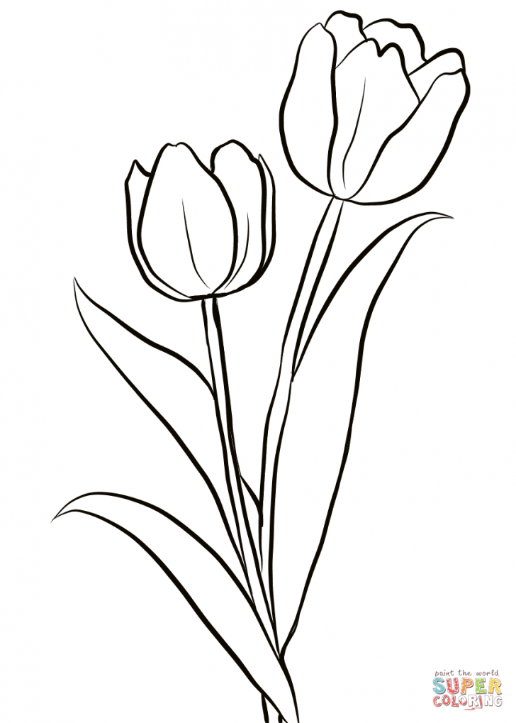 Tulip clipart colouring page. Awesome coloring pages about