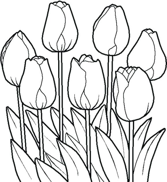 Tulip clipart colouring page. Flower pages coloring