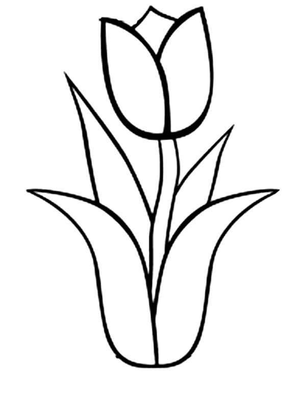 Tulip clipart colouring page. Coloring pencil and in