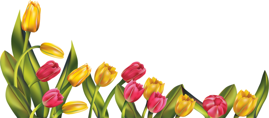 Tulip clipart flower boarder. Spring borders png res