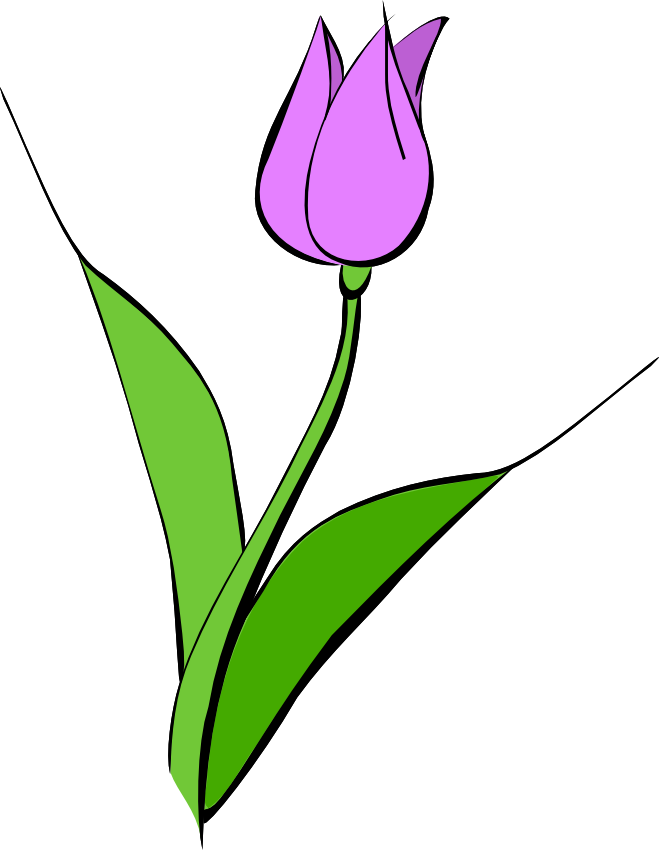 tulip transparent violet