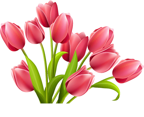 Tulip clipart transparent background. Rose tulips png stickpng