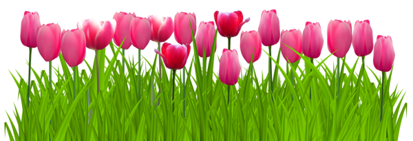 Tulip transparent grass. With pink tulips png