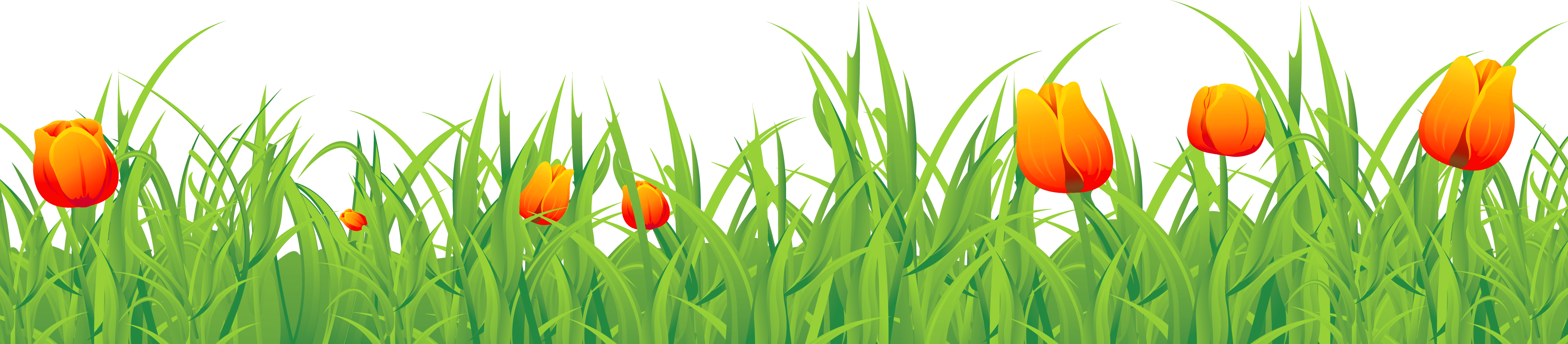 Tulip transparent grass. Time festival ground with