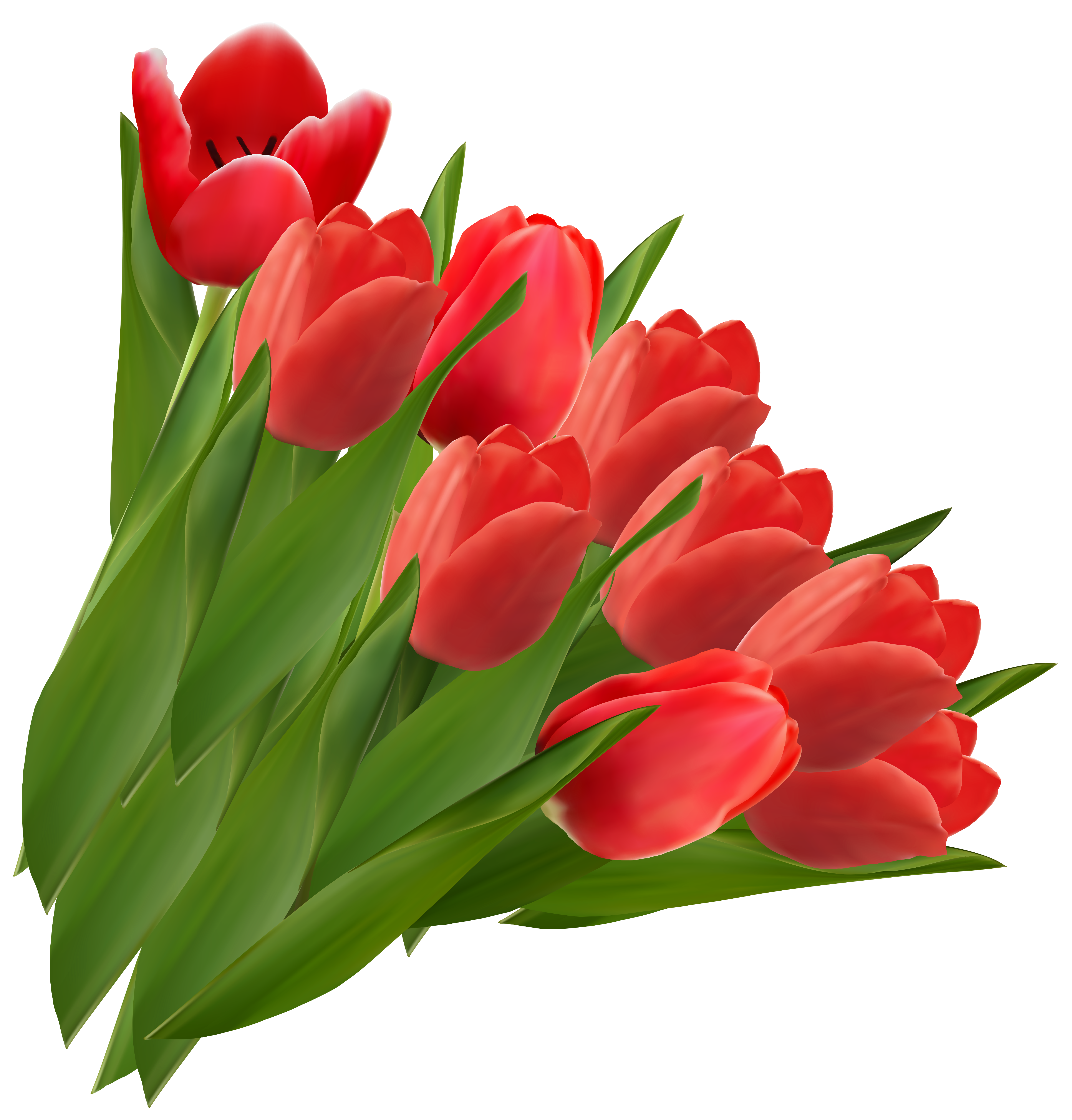 Tulips clipart. Red png picture gallery