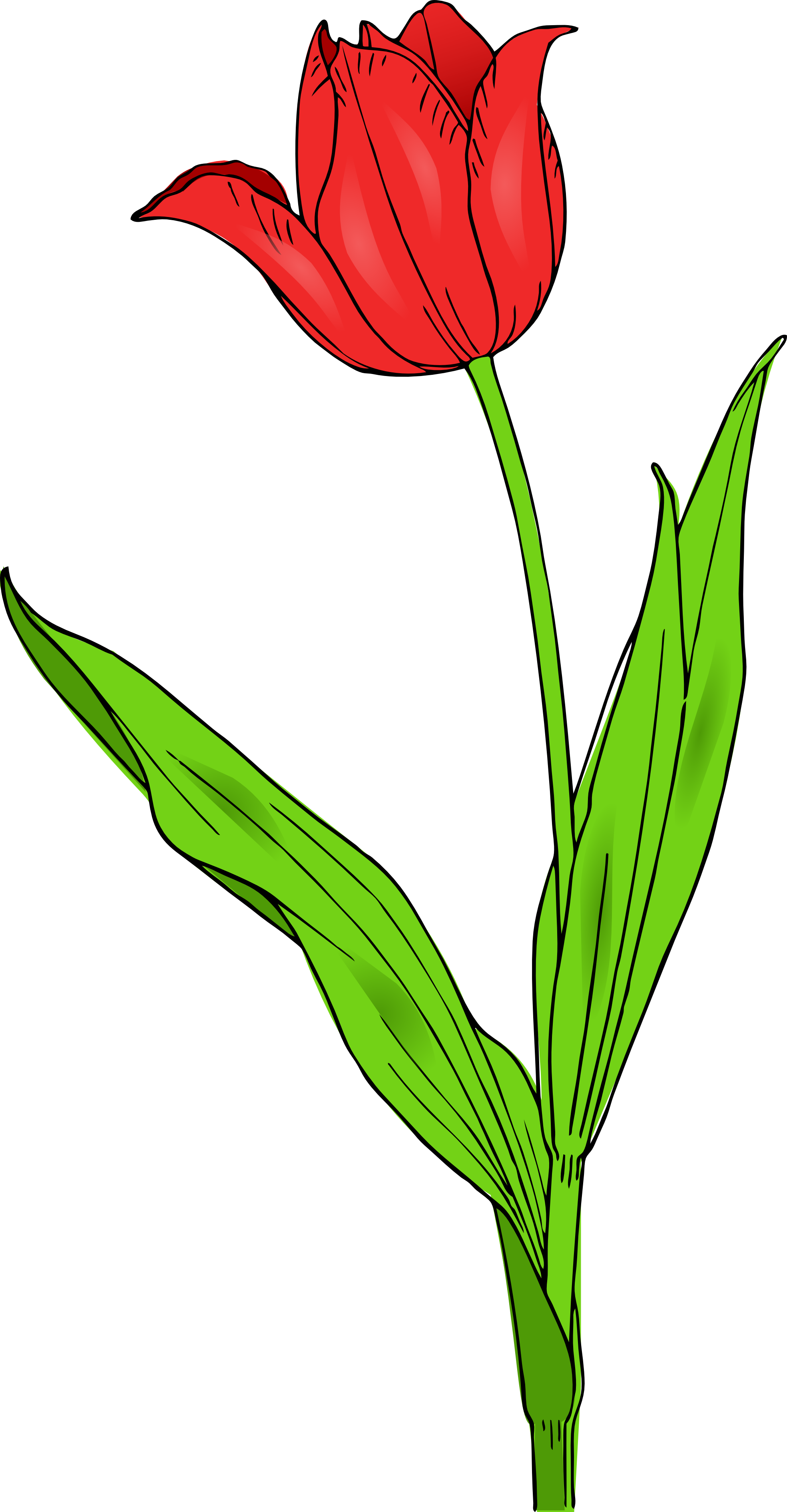 Tulips clipart svg. Colored tulip spring panda