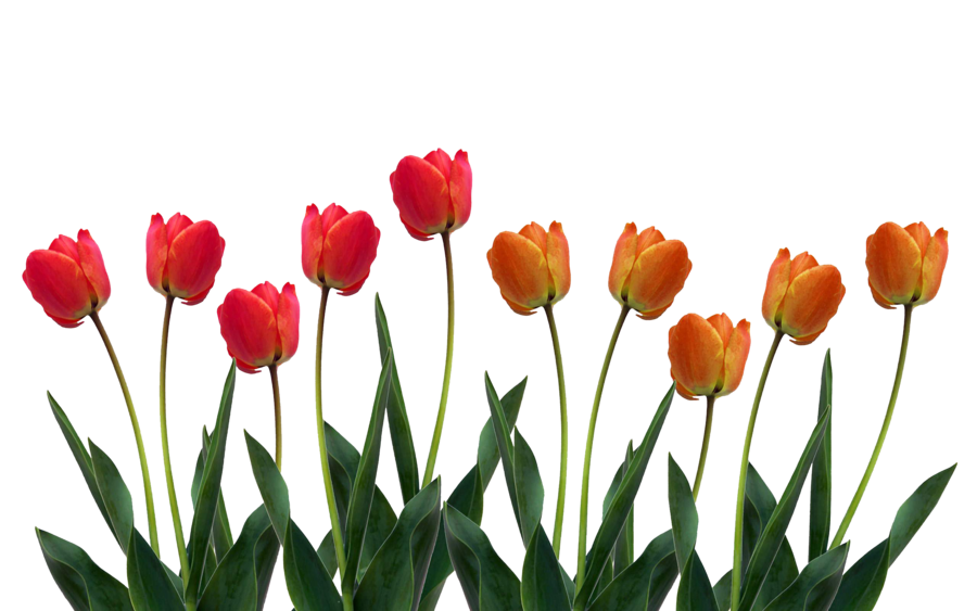 row of flowers png