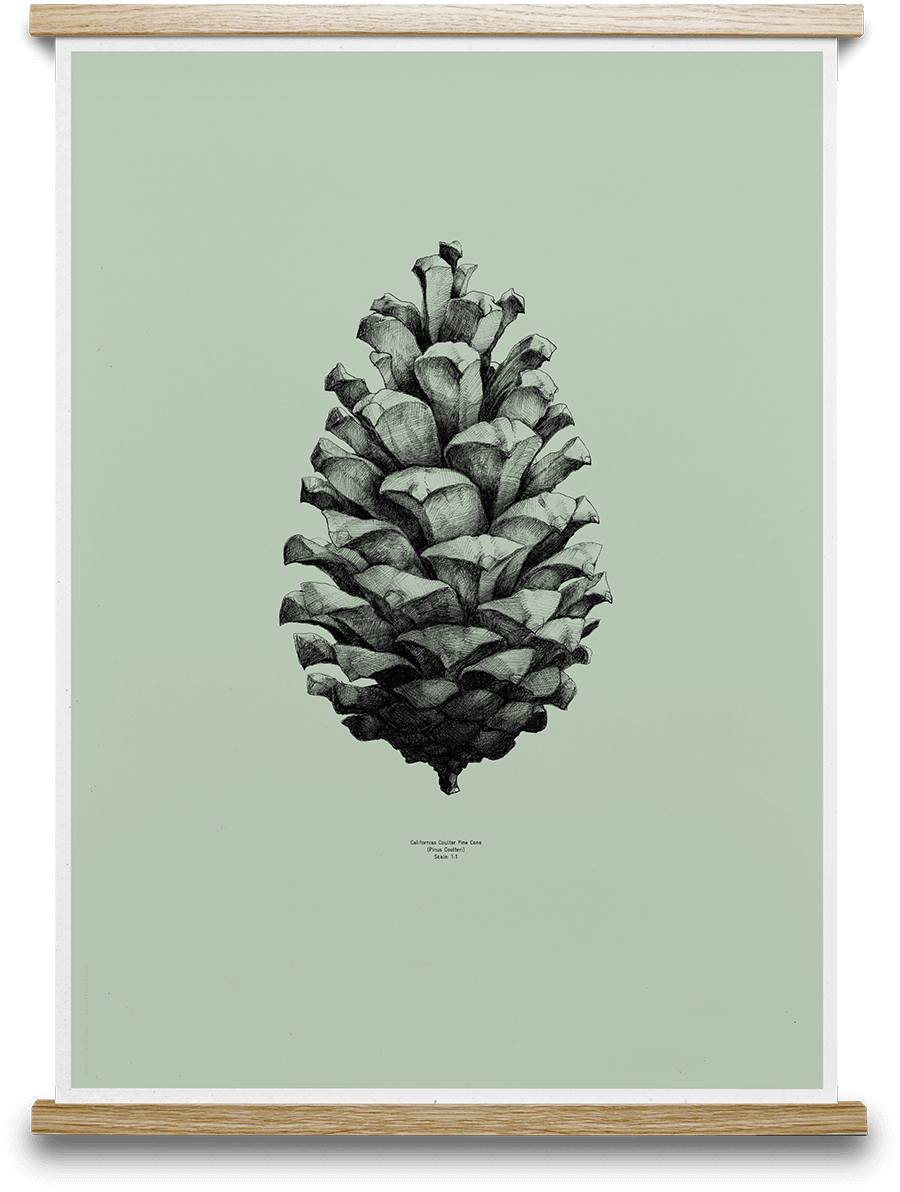 Tumbler drawing nature. Pine cone mint