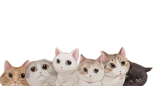 Tumblr cat png. Overlay thelesspngwanted